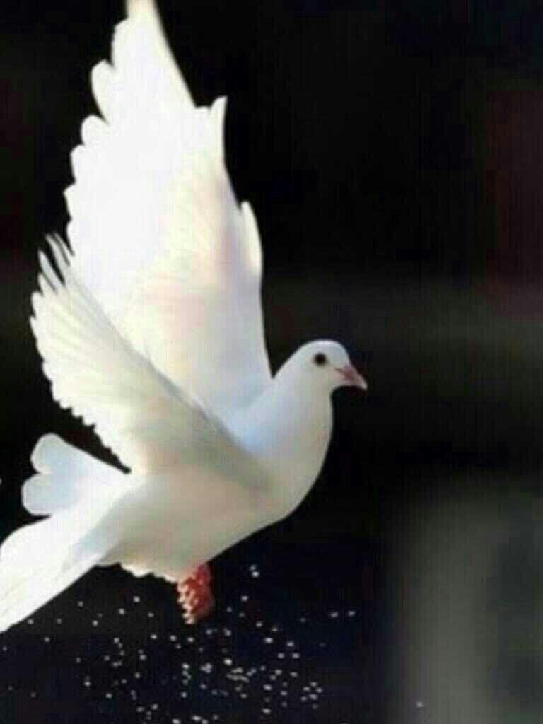 يسعد مساكم احبتي في الله اولاً يشهد علي ربي اني م سوي