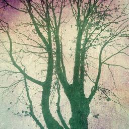 nature tree paper
