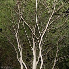 trees nature city