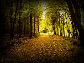 nature autumn colorful photography