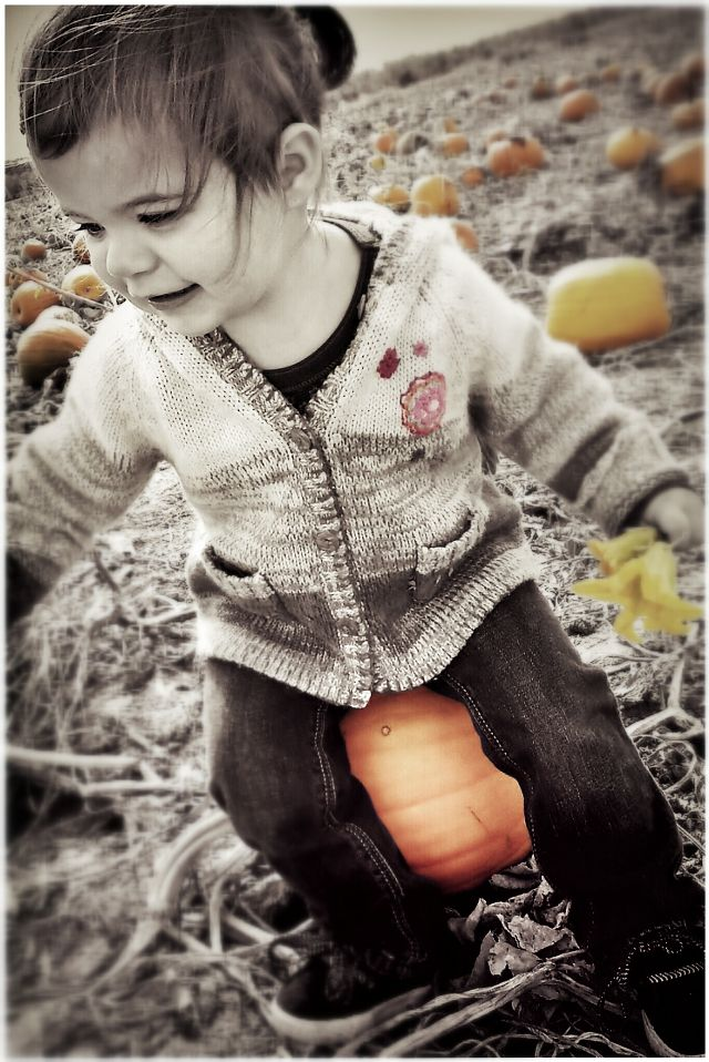 pumpkin photography