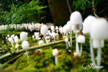 photography mushroom