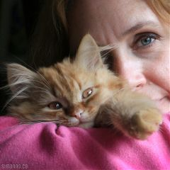 love kittens pets & animals cats cute