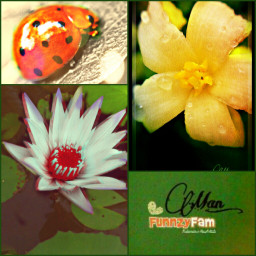 collage cute flower nature sepia