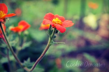 summer nature photography vintage colorful flower