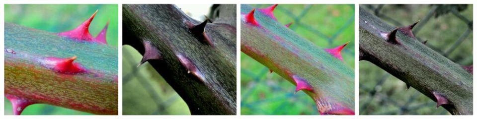 nature macro takenbyme winter collage