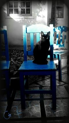photography color splash nature photostory pets & animals family