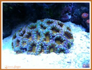 nature photography pets & animals colorful cute coral