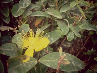 photography flower yellow nature