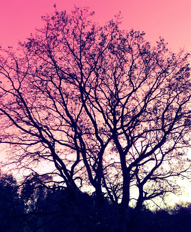 Same tree in pink :D