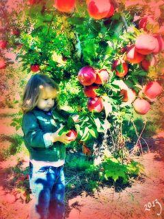 love people baby nature food cute apples lilli lillirose applepicking autumn upstateny ilovenyilovemydaughter 2013 apples lilli lillirose applepicking autumn upstateny ilovenyilovemydaughter 2013