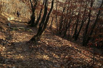 korea nature colorful people autumn