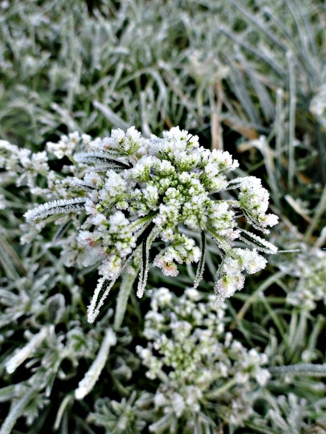 pictures of frost