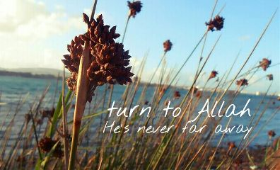 nature islam summer quotes & sayings photostory