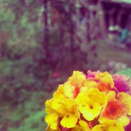 garden macro flower
