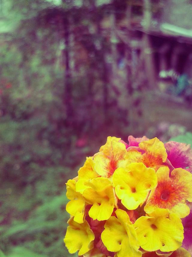 Flower Vol3