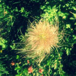 photography flower summer nature travel andorra