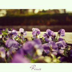 cute flower japan photography winter