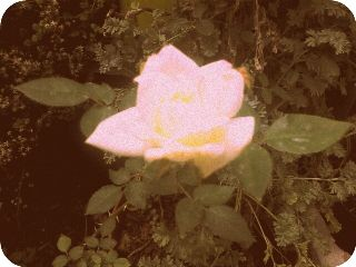 flower nature sepia