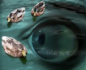 nature pets & animals abstract water eye collage