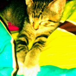new baby kitty so cute happy