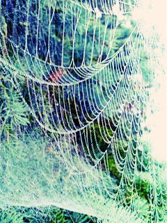 spiderweb nature weather